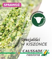 Specjaliści w kiszonce - CAUSSADE nasiona